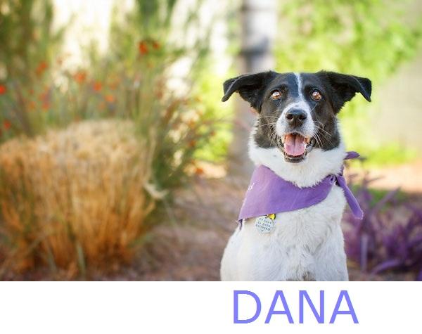 © Kira DeDecker Photography, Adopt-Dana-Arizona-Border-Collie-Rescue