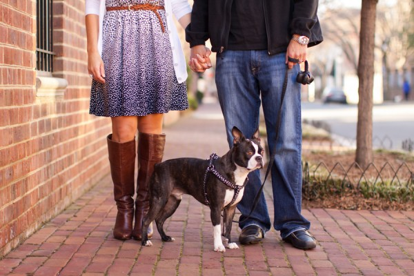 © Katie Nesbitt Photography, Boston-Terrier-family