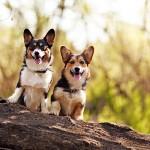 dynamic-dog-duo