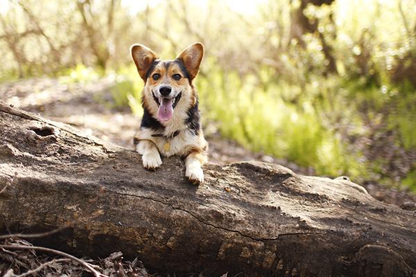 © Purple Collar Pet Photography, lifestyle-pet-photographer