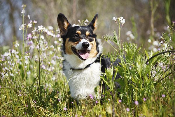 © Purple Collar Pet Photography, modern-dog-photography