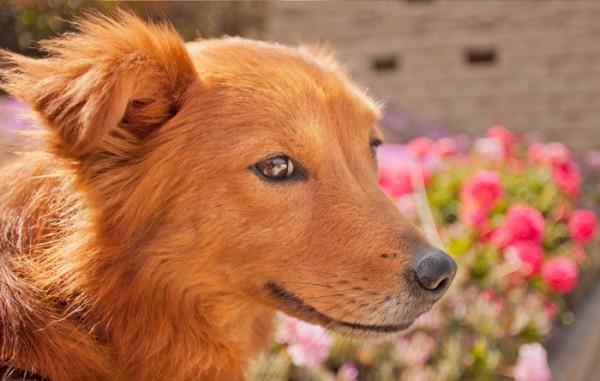 © Fetchlight Photography, dog-with-Mona-Lisa-smile