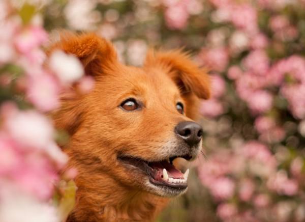 © Fetchlight Photography, creative-dog-photographer