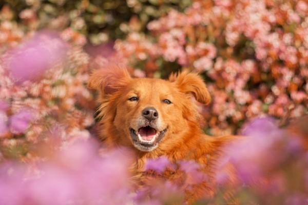 © Fetchlight Photography, modern-dog-photographer