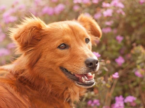 © Fetchlight Photography, smiling-dog