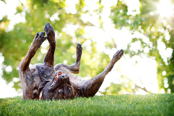 © Kira DeDecker Photography, dog-photographer