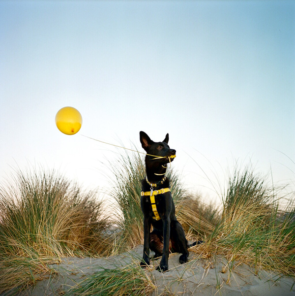 © Photo Lab Pet Photography, pet-photographers