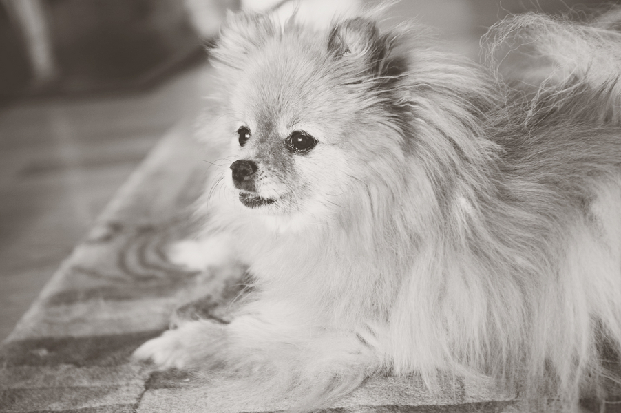 © Ashleigh Miller Photography, Senior-Pomeranian