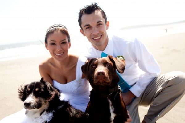 best-dogs-at-wedding