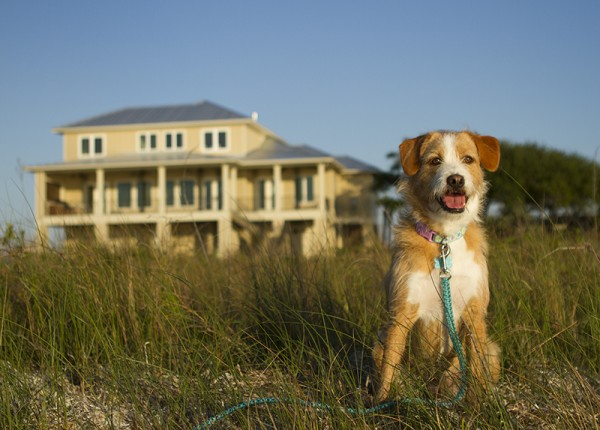Happy Tails:  Daly