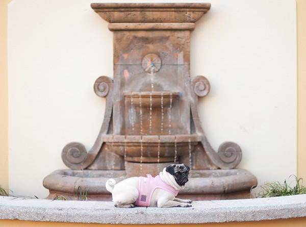 © Emma Grace Photography, modern-dog-photographer