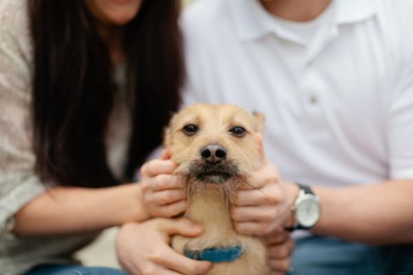 © Lauryn Galloway Photography, Fumanchu-dog