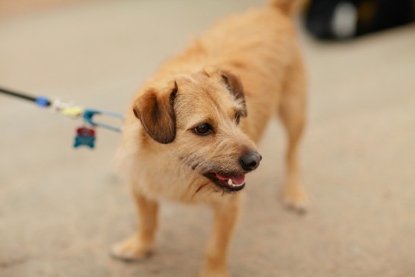 © Lauryn Galloway Photography, rescued-scruffy-sweetie