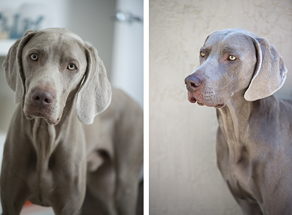 © Severine Photography, handsome-dogs