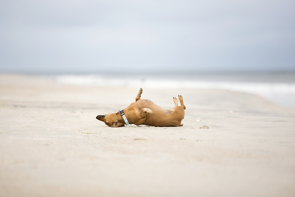 © McGraw Photography, life-at-the-beach