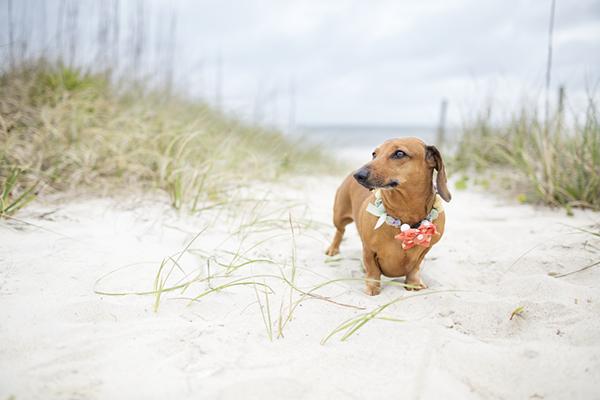 © McGraw Photography, lifestyle-dog-portraits