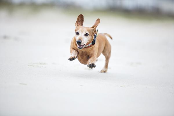 © McGraw Photography, senior-dog-running
