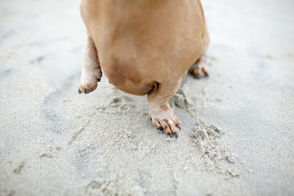 © McGraw Photography, dog-paw-detail
