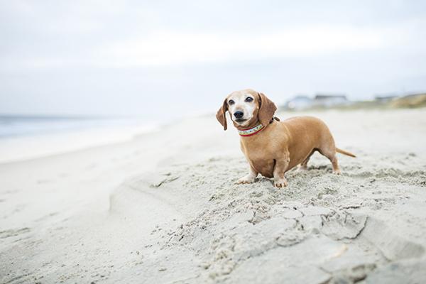 © McGraw Photography, dog-photographer