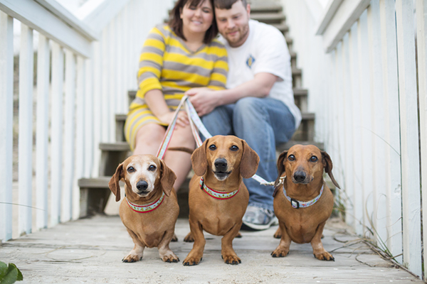 © McGraw Photography, Trio-of-Doxies