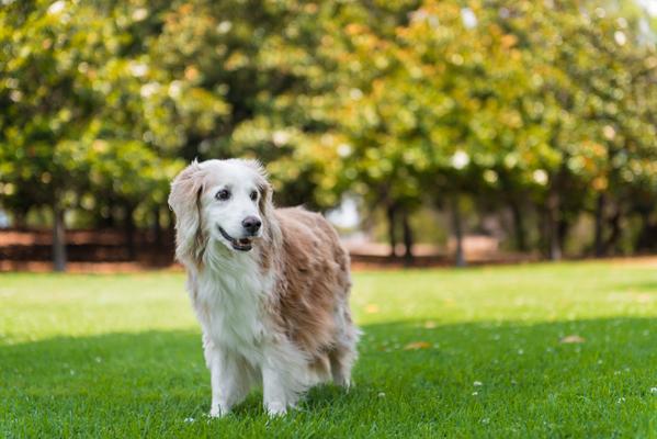 © Westway Studio. adoptable-senior-dog, San-Diego-rescue-photographer