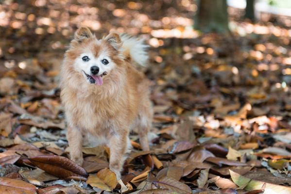 © Westway Studio, San-Diego-dog-portraits