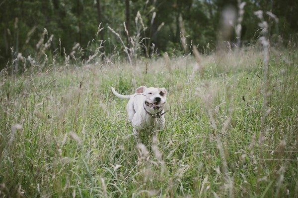 © Willow & Co, Staffordshire-mix-running-in-field