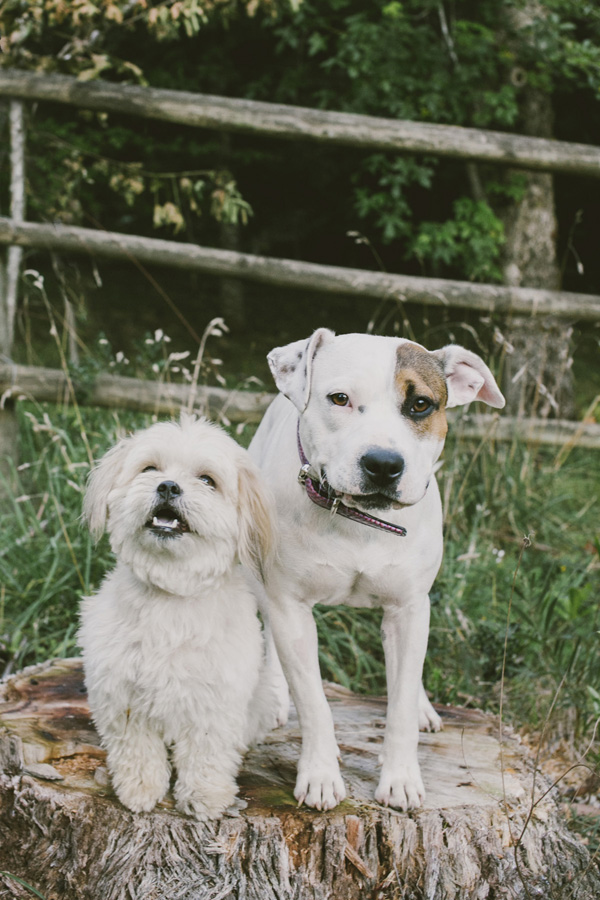 © Willow & Co, Shih-Tzu-and Staffordshire-Cross-best-friends