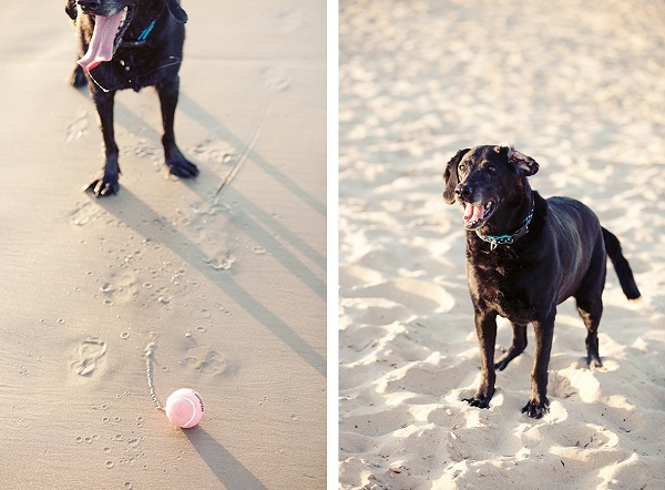 © Andi & Zoe Photographers, Black-Lab-at-beach-Photography-session