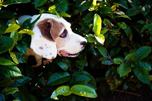 © Emilee Fuss Photography, senior-dog-in-bushes