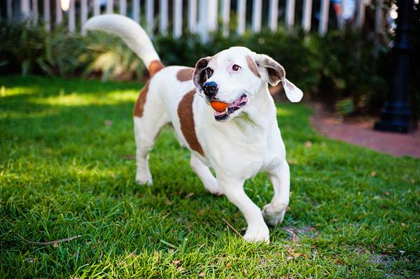 © Emilee Fuss Photography, senior-dog-orange-ball