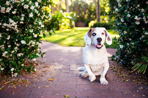 © Emilee Fuss Photography, modern-pet-photography