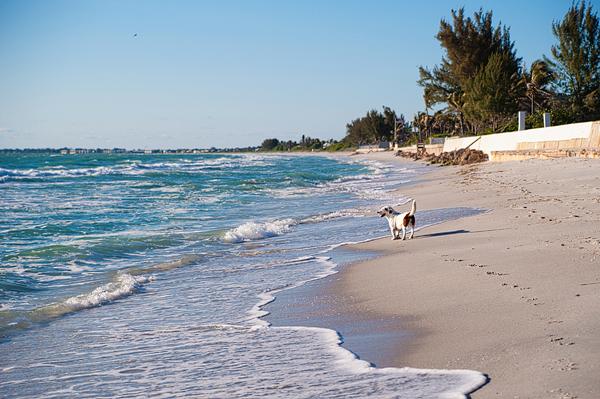 © Emilee Fuss Photography, Boca-Grande-dog-photography