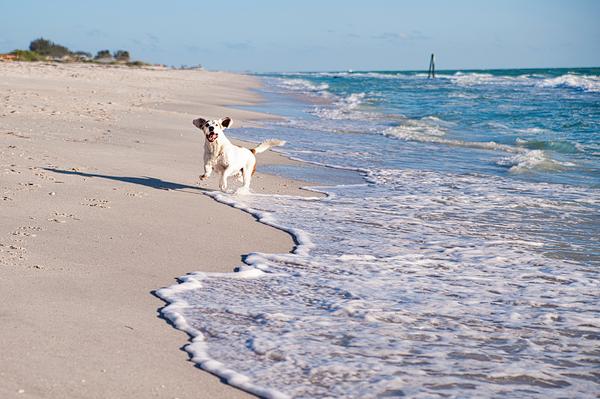 © Emilee Fuss Photography, Boxer-Basset-mixed-breed-enjoying-beach