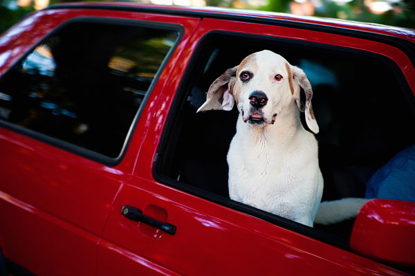 © Emilee Fuss Photography, Dog-riding-in-car
