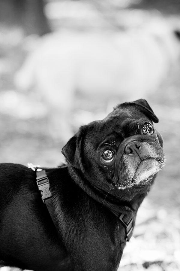 © Thomas Pitera Photography, lifestyle-dog-photographer