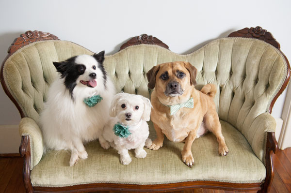 Happy Tails:  Nelly, Sophie & Theo