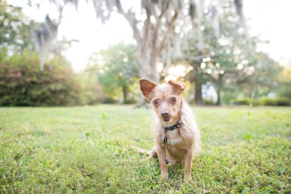 © Dana Cubbage Photography, Pet-Lifestyle-Photographer