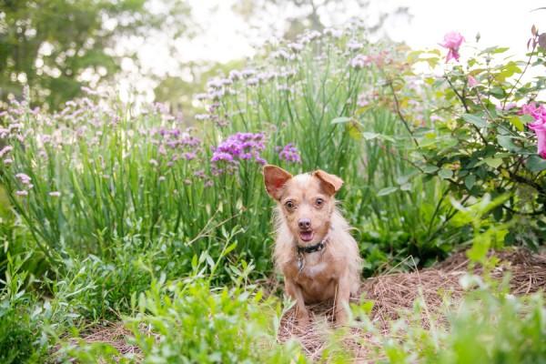 © Dana Cubbage Photography 2013, Lifestyle-dog-photography