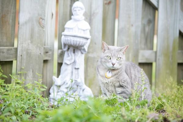 © Dana Cubbage Photography 2013, cat-in-backyard