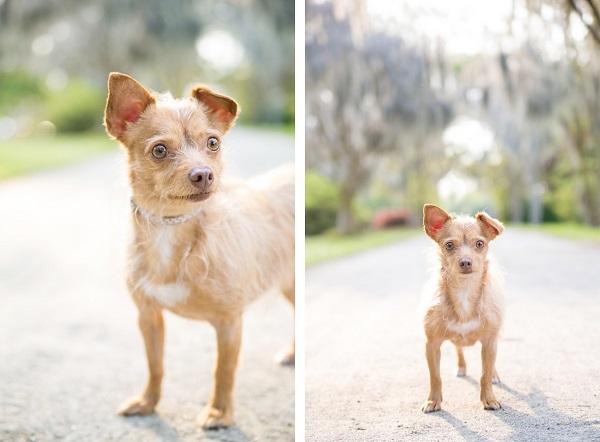© Dana Cubbage Photography, Charleston, SC-Pet-Photographer