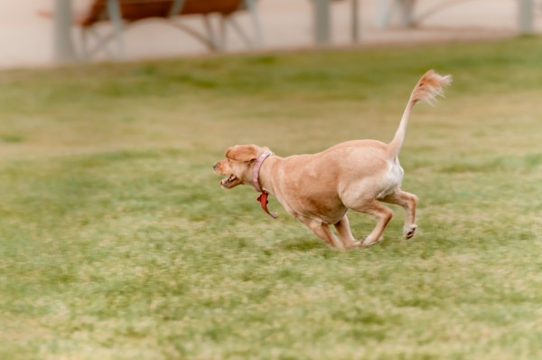 © Patricio Menis Photopets, awesome-dog-tail