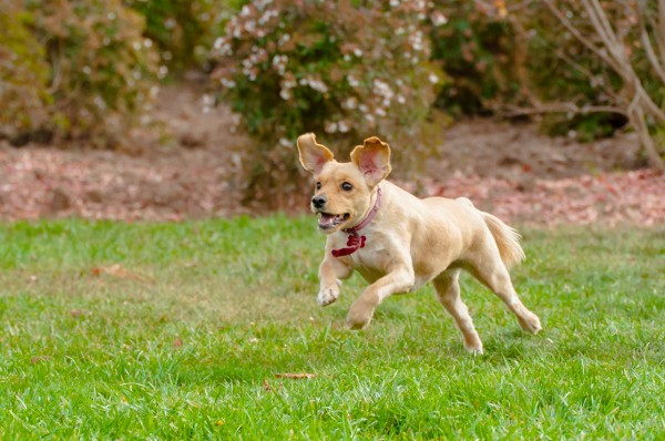 © Patricio Menis Photopets, Dog at park, on grass, sunny day.