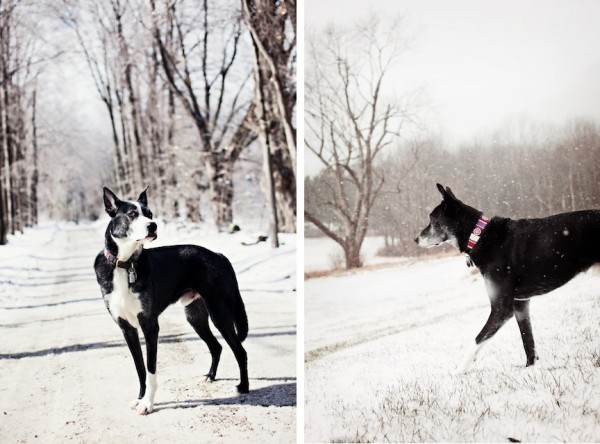 © Eardog Productions | Rescued Border Collie/Greyhound in the snow,