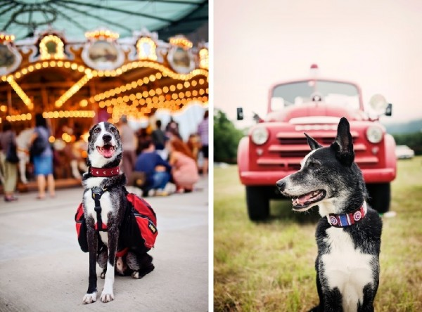 © Eardog Productions | rescue Border Collie/Greyhound therapy and service dog, City Dog Country Dog, dog at carousel, dog with old fire truck