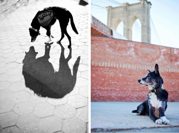 © Eardog Productions | Theo Brooklyn Bridge, Theo and his wolf shadow,