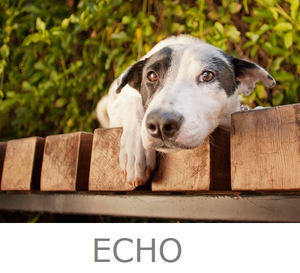 © Fetchlight, Adoptable-Cattle-Dog-mix-from-Aussie-Rescue-San-Diego