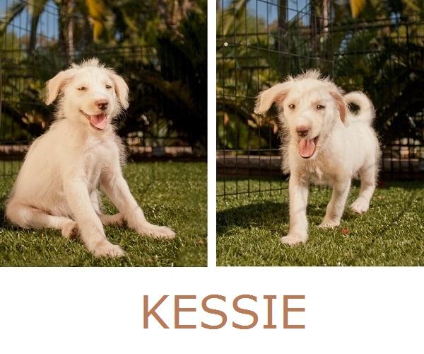 © Fetchlight, Adoptable-Terrier-Aussie-mix, Aussie-Rescue-San-Diego