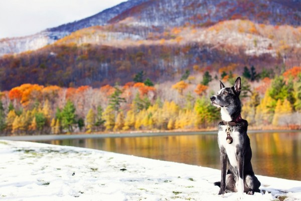 © Eardog Productions | certified therapy dog in Vermont during late autumn, handsome-dog