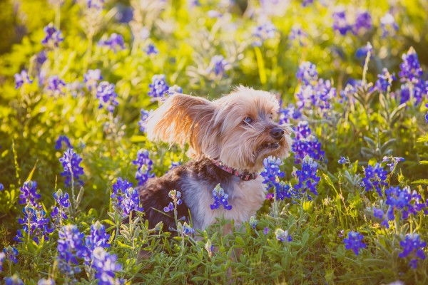 © Monica Olson Photography, Texas-Lifestyle-Pet-Photographer